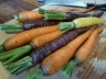 Raw Rainbow Carrots from Gonzalez Farms
