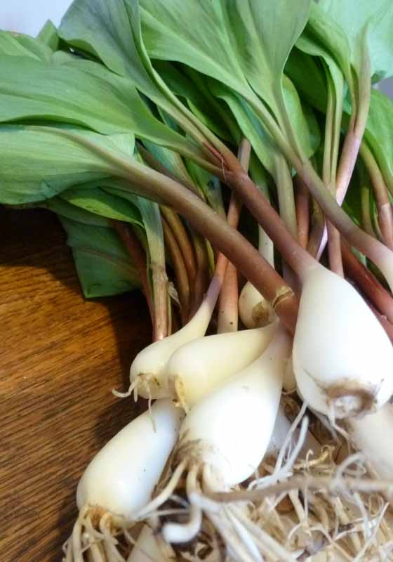 ramps from union square farmers market
